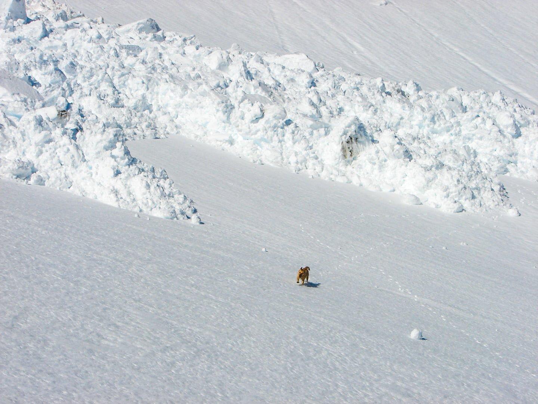 avalancha-aludes-pirineo